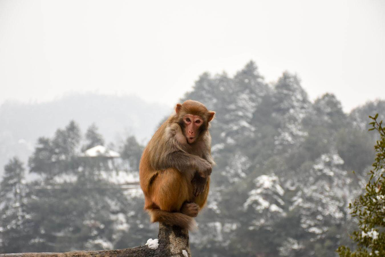 """What is the """"Monkey on Shoulder"""" Concept in Time Management?"""